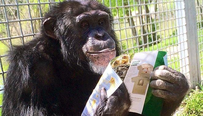 Ein Schimpanse hält einen Flyer in der Hand